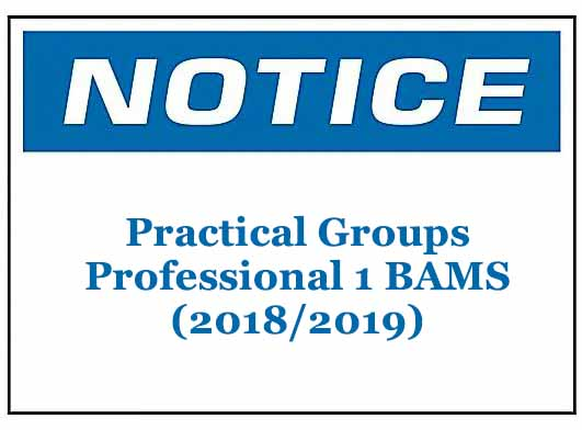 Practical Groups: Professional 1 BAMS (2018/2019)